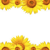 Sunflowers card background — Stock Photo