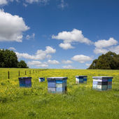 Beehives in herb field — Stock Photo