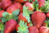 Strawberries closeup — Stock Photo