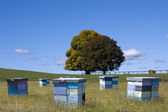 Beehives multicolored — Stock Photo