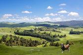 Bull grazing on the picturesque landscape background — Stock Photo