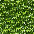 Green wall — Stock Photo