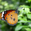 Butterfly — Stock Photo #10734559