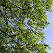 Stock Photo: Background of Green Tree