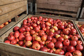 Crate with Apples — Stock Photo