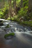 O rio na floresta — Fotografia Stock