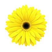 Yellow daisy flower isolated on white - 3d render — Stock Photo