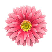 Pink daisy flower isolated on white - 3d render — Stock Photo