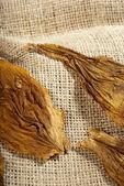 Macro of a tobacco leaf — Stock Photo