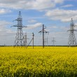 Power line on a blossoming rape field. — Stock Photo