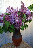 Blossoming lilac. — Stock Photo