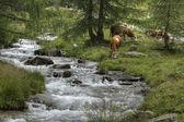 South Tyrol 006 — Stock Photo
