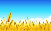 Wheat Farm — Stock Vector