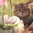 Stock Photo: Cat near basket with rose petals for wedding