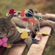 Stock Photo: Cat sitting on multicolored hearts