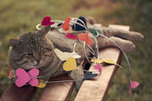 Cat sitting on multicolored hearts — Stock Photo