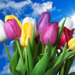 Stock Photo: Flowers on blue sky