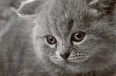 Portrait of a beauty kitten — Stock Photo