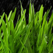 Green grass and rain — Stock Photo