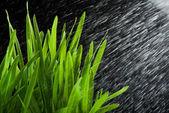 Respingo de erva e água verde — Fotografia Stock