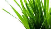 Grüne gras isoliert — Stockfoto