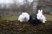 Three little rabbits — Stock Photo