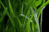 Closeup of drops on green grass — Stock Photo