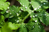 Water drop on leaf background — Stock Photo