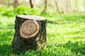 Stump on the green grass — Stock Photo