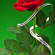 One red rose — Stockfoto