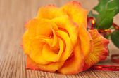 Fiery rose — Stock Photo