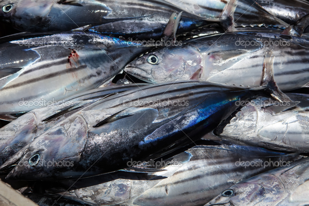 Tuna fish stock photo trexec 11523632 for Tuna fish price