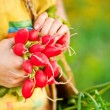 Close-up of ripe radish — Stock Photo #11166949