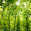 Green forest trees background — Stock Photo