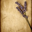 Lavender flowers isolated on brown textured background — Stock Photo