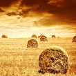 Wheat harvest time - Stock Photo