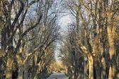 Woodland walk in a park in Avila, Spain — Stock Photo