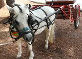 Pequeño carro tirado por un caballo blanco — Foto de Stock