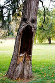 Aspect scary tree — Stock Photo