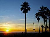 Palmiye ağaçlarında renkli günbatımı — Stok fotoğraf