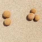 Posidonia oceanica fruits on a mediterranean beach — Stock Photo