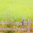 Royalty-Free Stock Photo: Balearic green meadow in formentera and wood fence