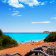 Cala Nova beach in Ibiza island with turquoise water — Stock Photo
