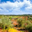 Ibiza island landscape with agriculture fields — Stock Photo