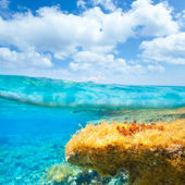 Ibiza Formentera underwater waterline blue sky — Stock Photo