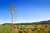 Ibiza island landscape with agriculture fields — Stockfoto