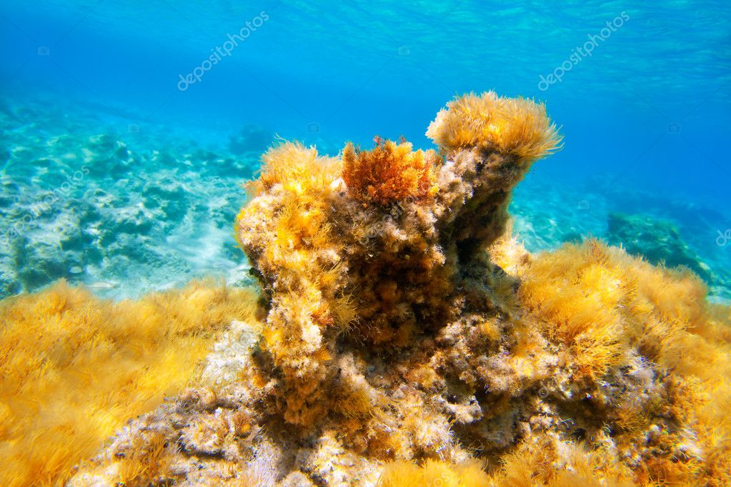 Ibiza Formentera underwater anemone seascape in golden and turquoise — Stock Photo #11350744