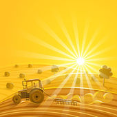 Harvesting on the sunny background — Stock Vector