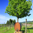 Wine barrel in the vineyard — Stock Photo