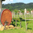 Wine barrel in the vineyard — Stock Photo